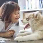 Pet insurance, Springfield MO, Millennium Brokers Insurance
